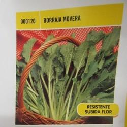 BORRAJA FLOR BLANCA MOVERA