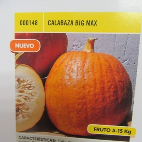 CALABAZA BIG MAX