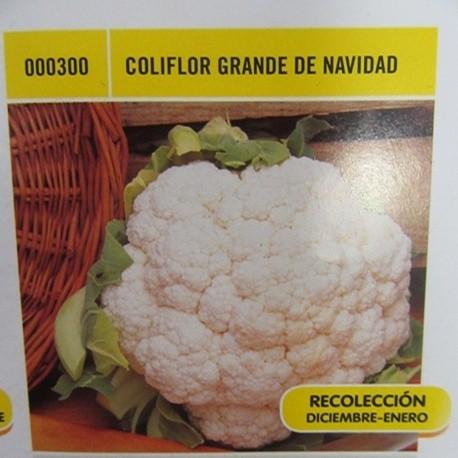 COLIFLOR GRANDE DE NAVIDAD