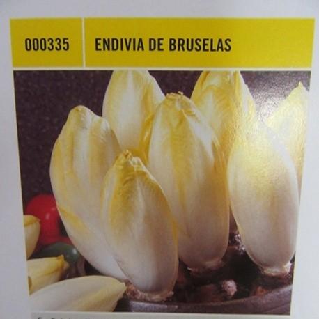 ENVIDIA DE BRUSELAS