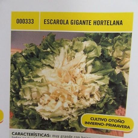 ESCAROLA GIGANTE HORTELANA