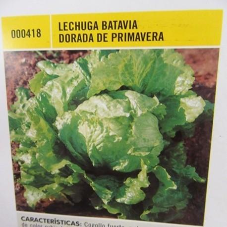 LECHUGA BATAVIA DORADA DE PRIMAVERA