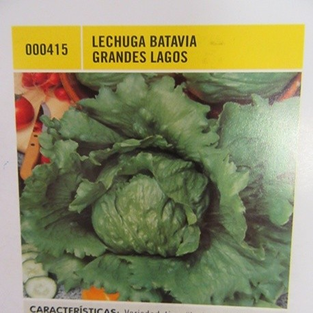 LECHUGA BATAVIA GRANDES LAGOS