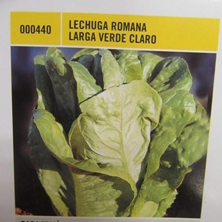 LECHUGA ROMANA LARGA VERDE CLARO