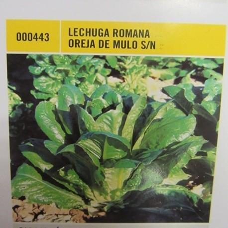 LECHUGA ROMANA OREJA DE MULO S/N