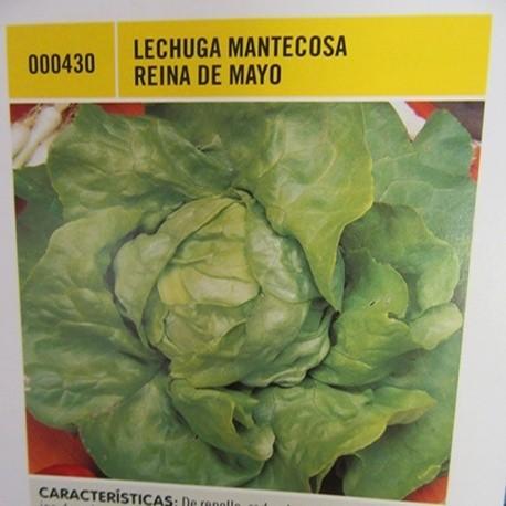 LECHUGA MANTECOSA REINA DE MAYO