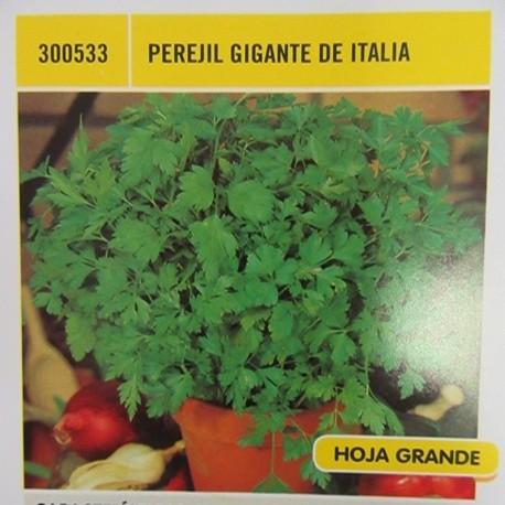 PEREJIL GIGANTE DE ITALIA