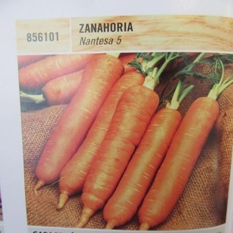 ZANAHORIA NANTESA 5