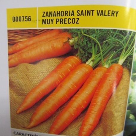 ZANAHORIA SAINT VALERY MUY PRECOZ