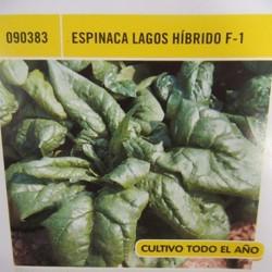 ESPINACA LAGOS HÍBRIDO F-1