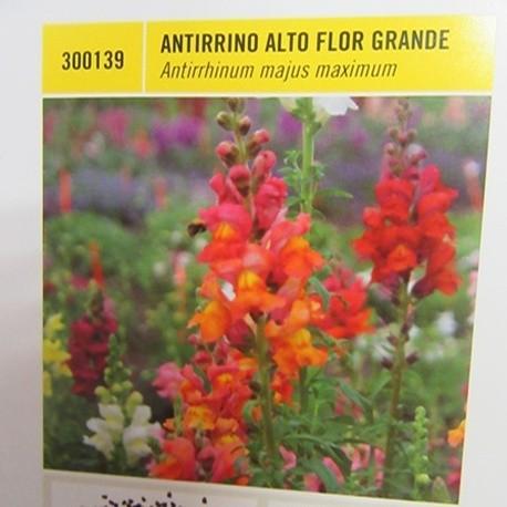 ANTIRRINO ALTO FLOR GRANDE