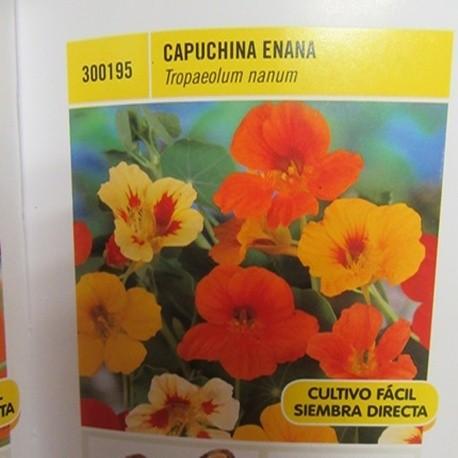 CAPUCHINA ENANA
