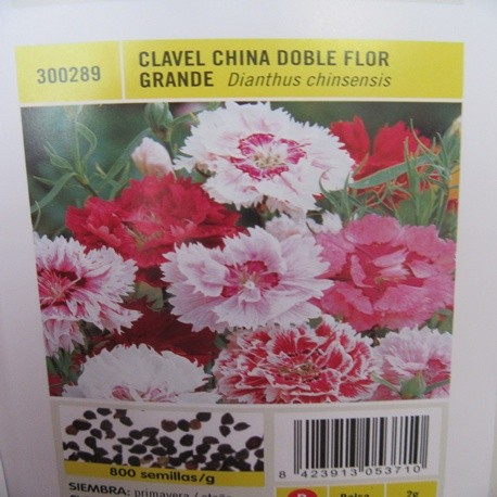 CLAVEL CHINA DOBLE FLOR GRANDE