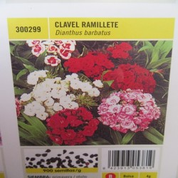 CLAVEL RAMILLETE