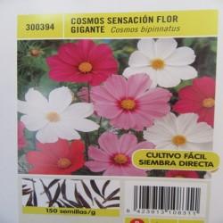 COSMOS SENSACIÓN FLOR GIGANTE