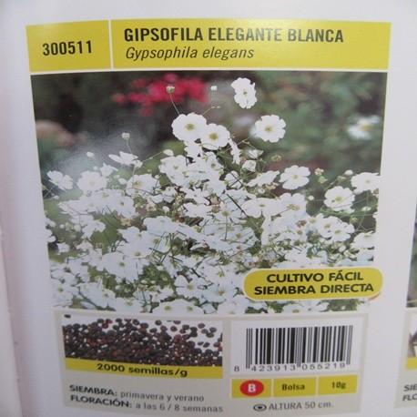 GIPSOFILA ELEGANTE BLANCA