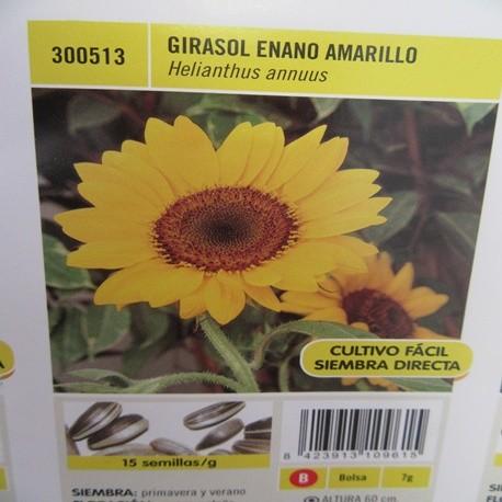 GIRASOL ENANO AMARILLO