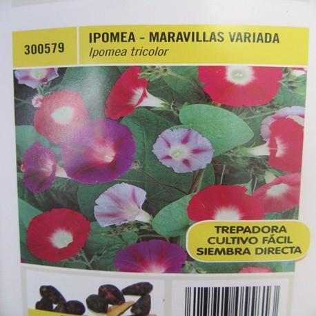 IPOMEA-MARAVILLAS VARIADA