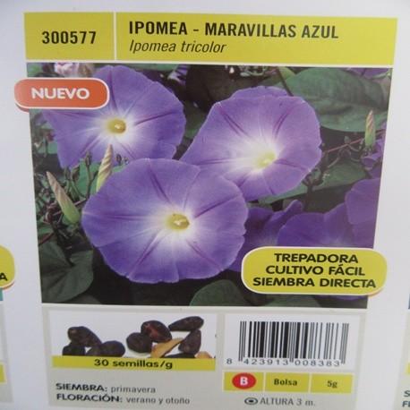 IPOMEA-MARAVILLAS AZUL