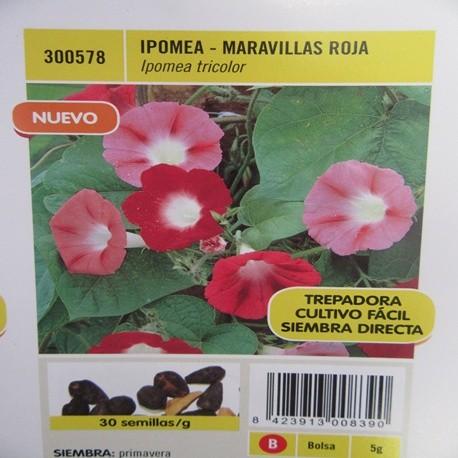 IPOMEA-MARAVILLAS ROJA