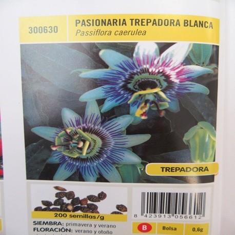 PASIONARIA TREPADORA BLANCA
