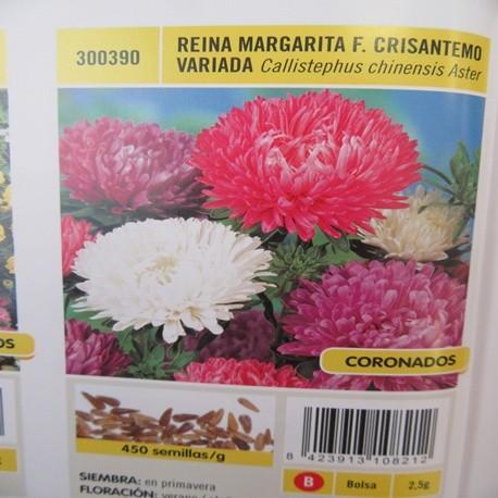REINA MARGARITA F. CRISANTEMO VARIADA