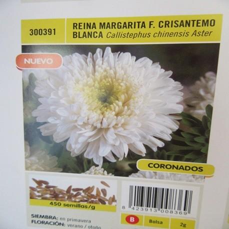 REINA MARGARITA F. CRISANTEMO BLANCA