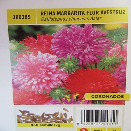 REINA MARGARITA FLOR AVESTRUZ