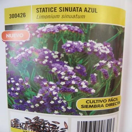 STATICE SINUATA AZUL