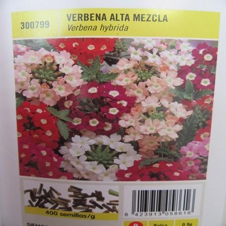 VERBENA ALTA MEZCLA