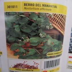 BERRO DEL MANANTIAL