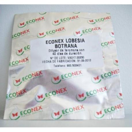 LOBESIA BOTRANA