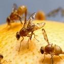 Moscas y Mosquitos-Insecticidas