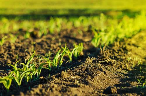 suministros agrícolas